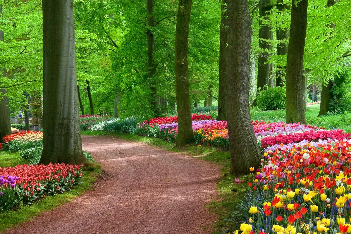 Tulpen Frühlingslandschaft