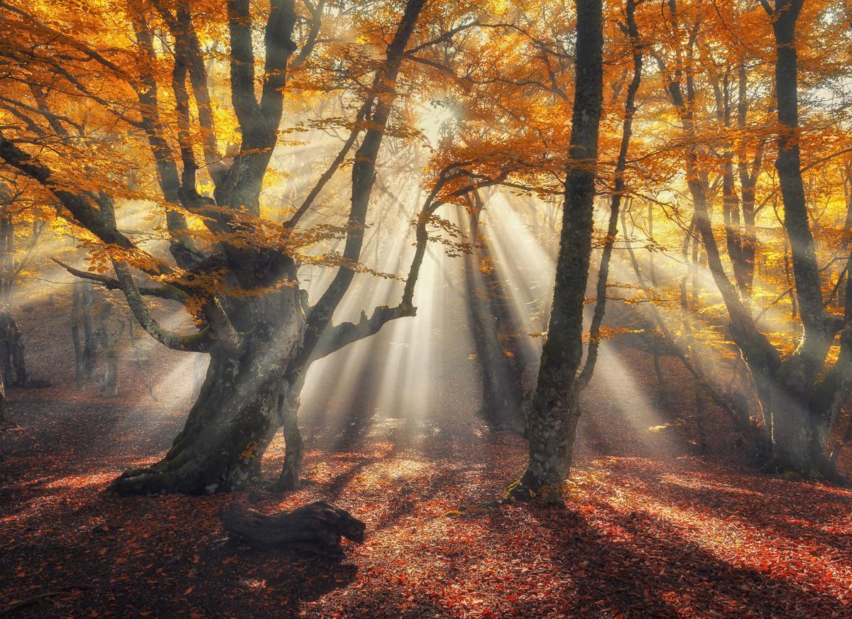 Magische alte Bäume