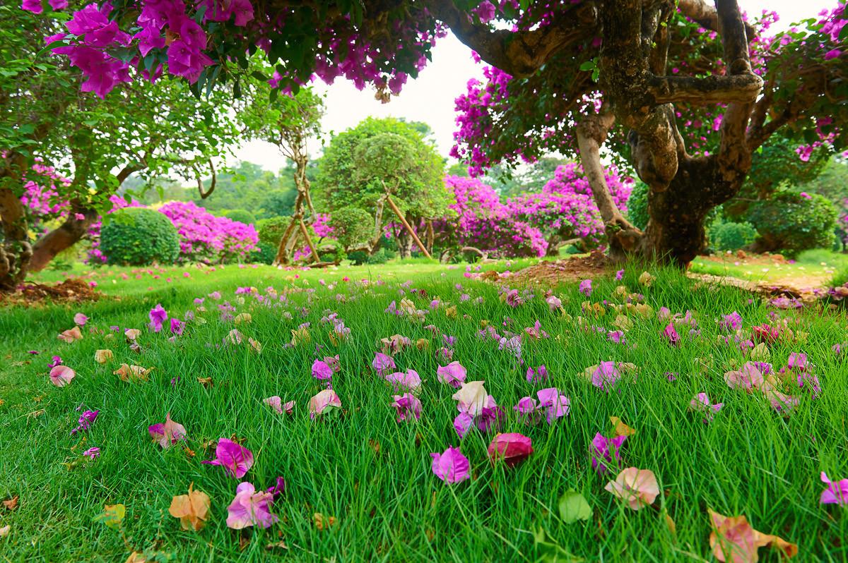 Rasenblumen