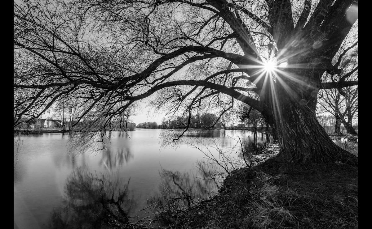 Baumsee Sonnenaufgang