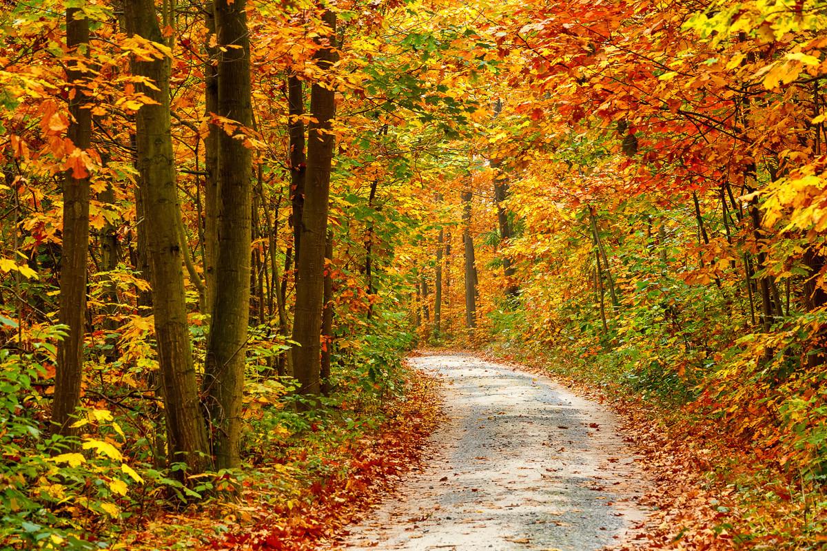 Weg im bunten Herbstwald