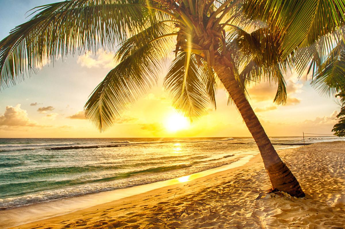 Barbados Palm Beach