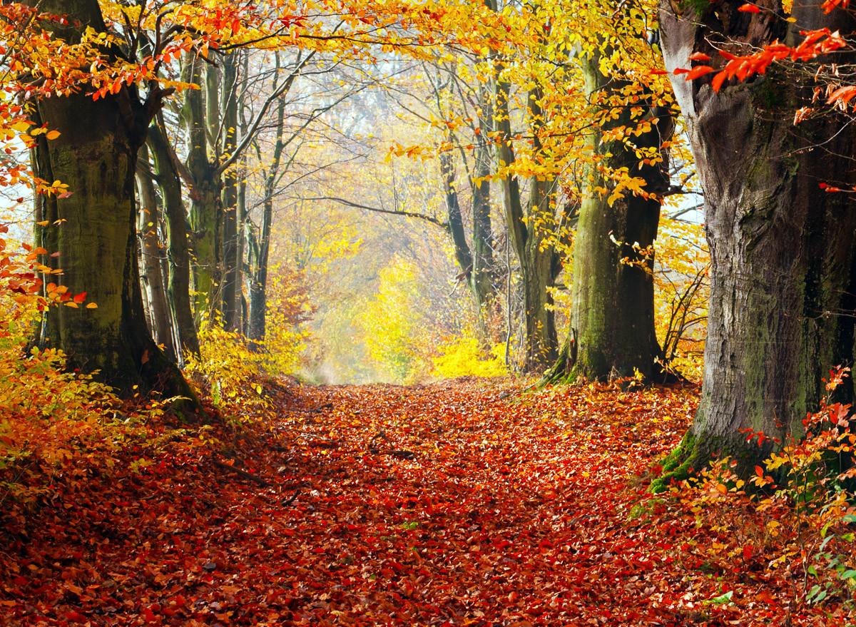 Herbst Waldweg