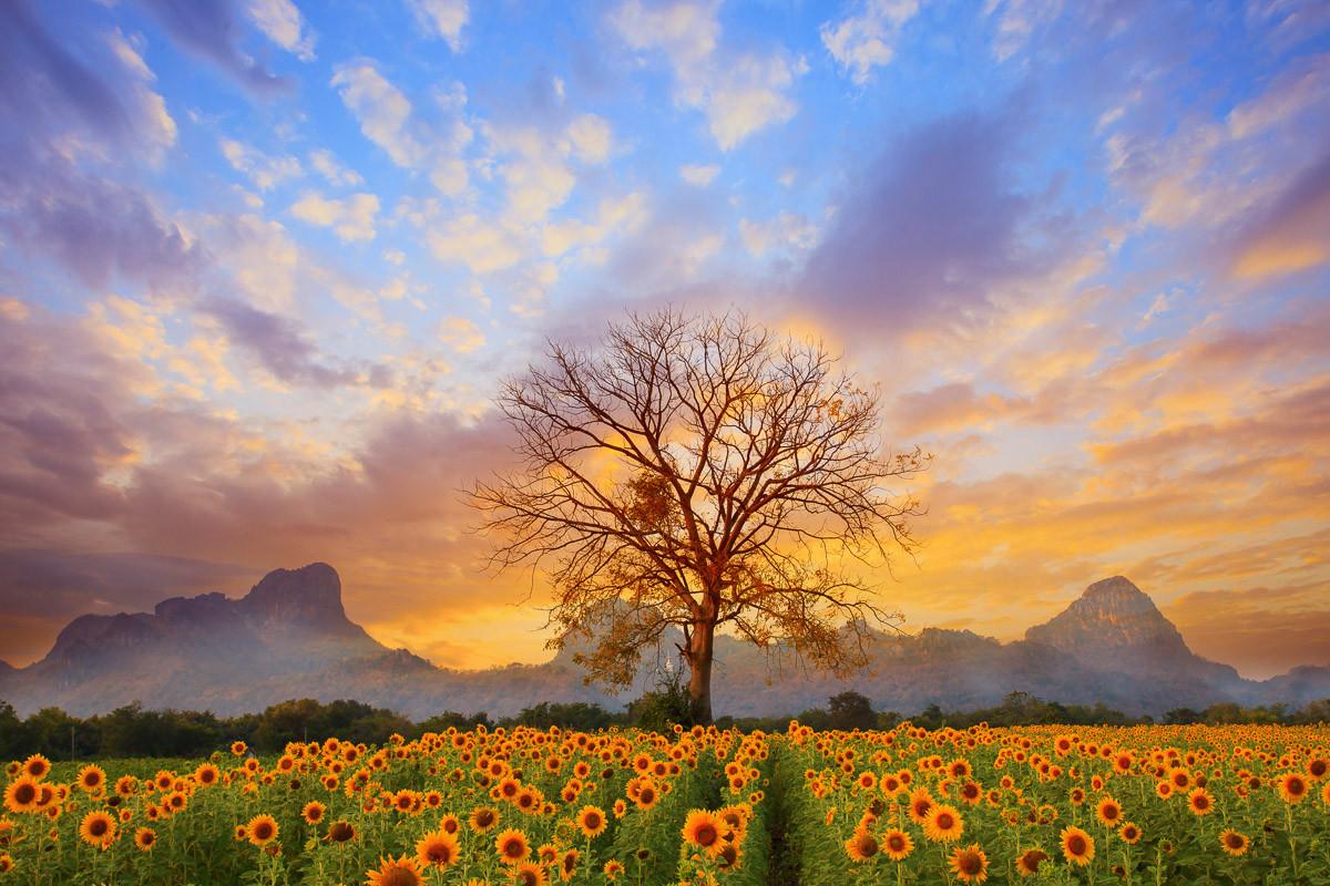 Sonnenblumen Dusky Sky
