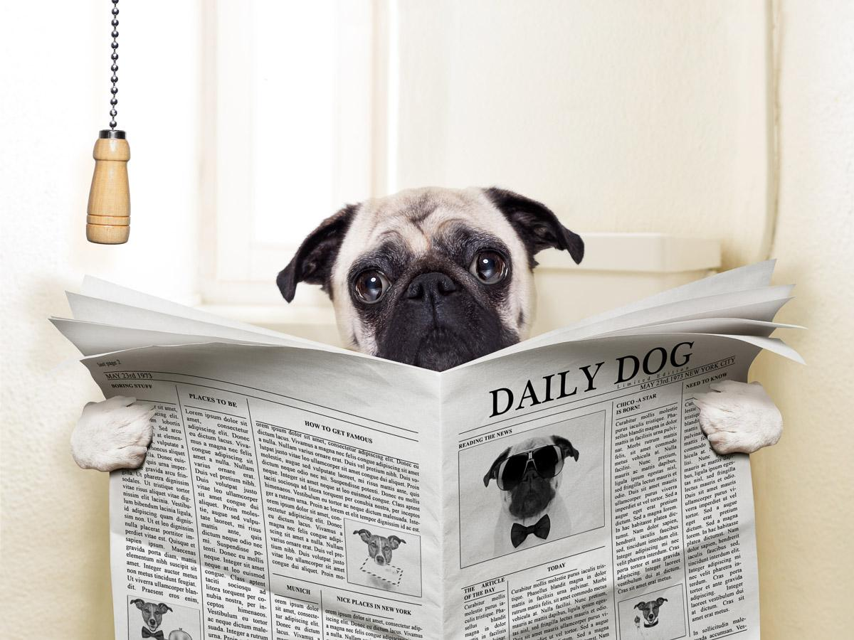 Zeitungshund