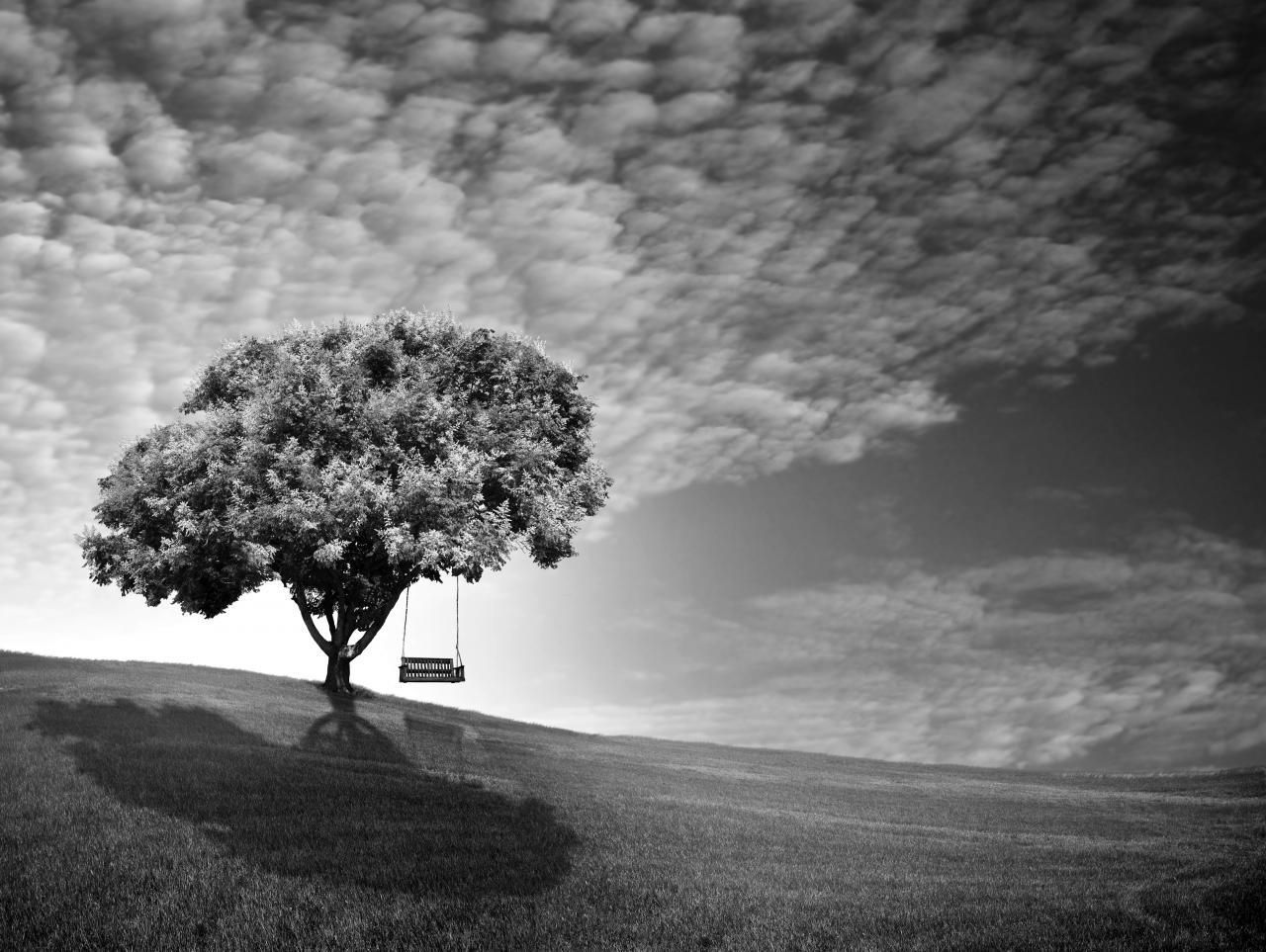 Baum Schwarz & Weiß