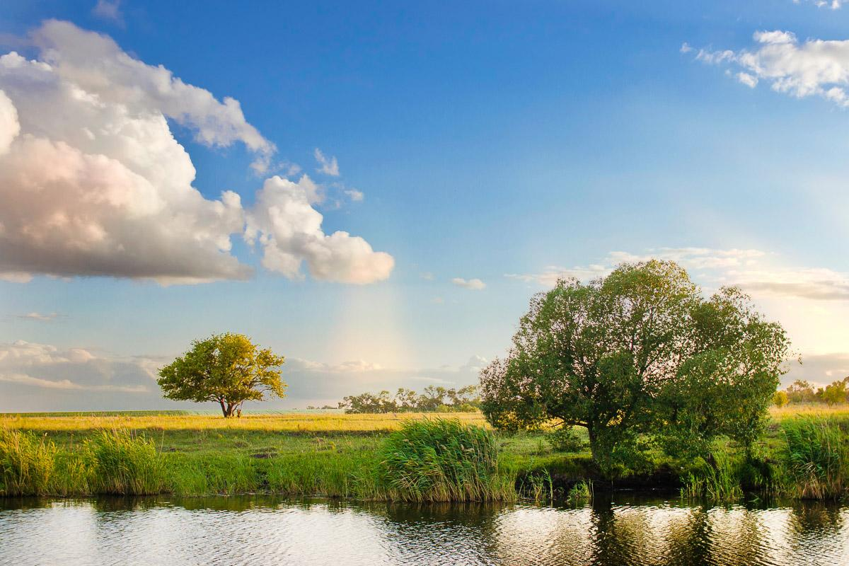 Flussbaumlandschaft