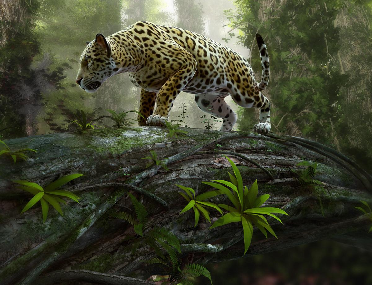 Jaguar auf der Suche