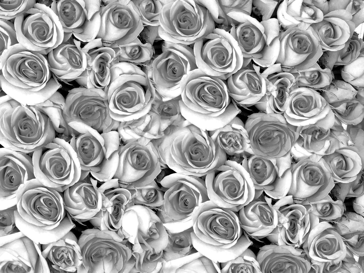 graue Rosen