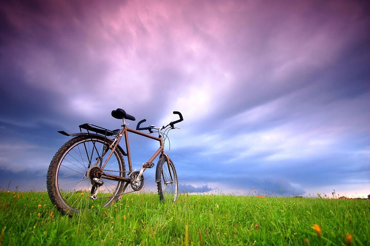 Fahrrad in Grünland