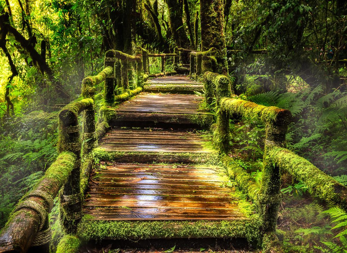 Regenwald bei Ang Ka