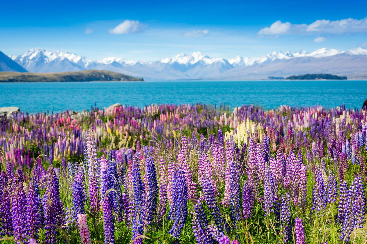 Montain See mit Blumen