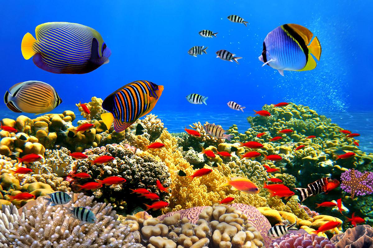 Korallenkolonie Rotes Meer