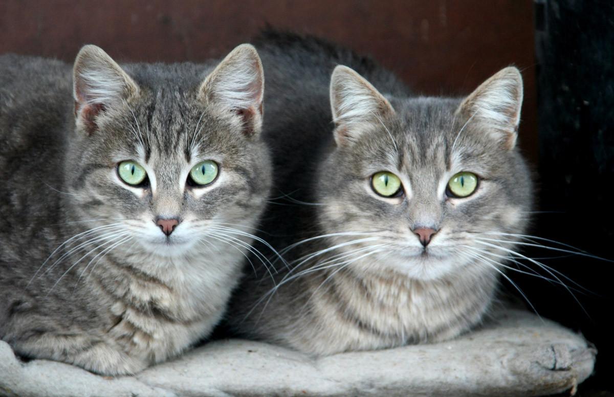 Grüne Augen Katzen
