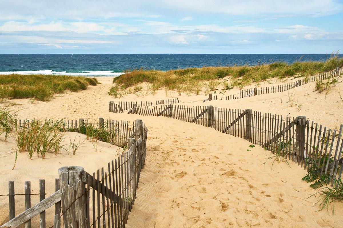 Cape Cod Dünen