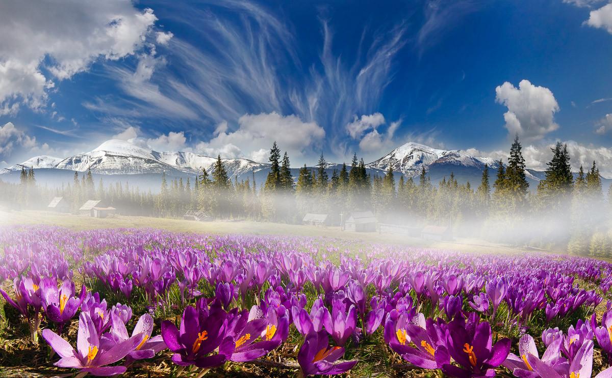 Karpatengebirgsblumen