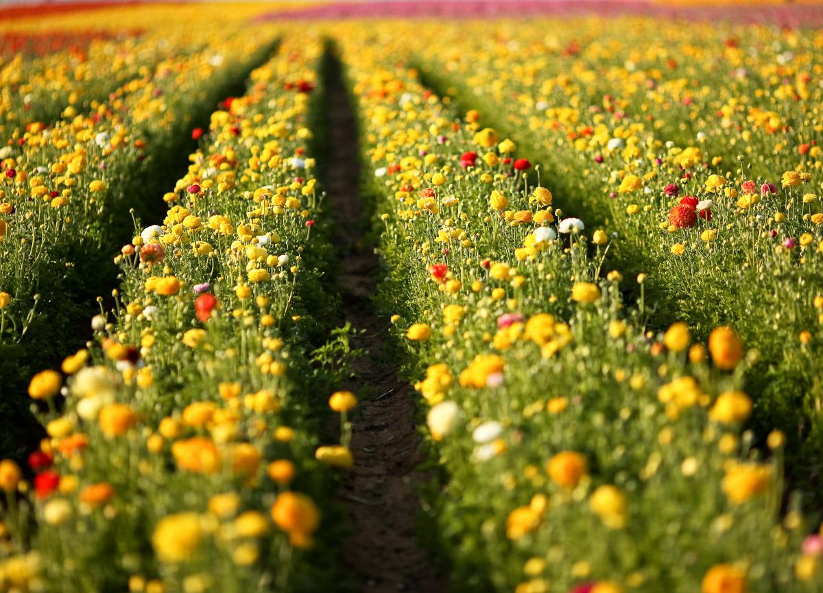 Blumenfeld in San Diego