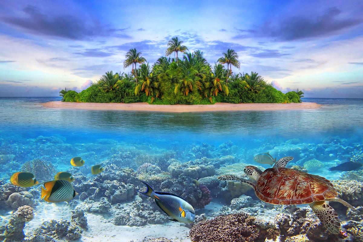 Meereslebewesen Malediven