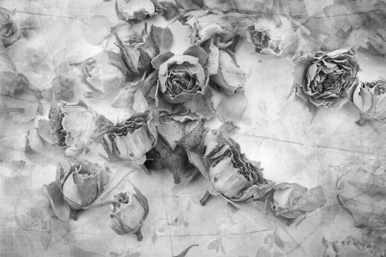 Rosen Schwarz & Weiß