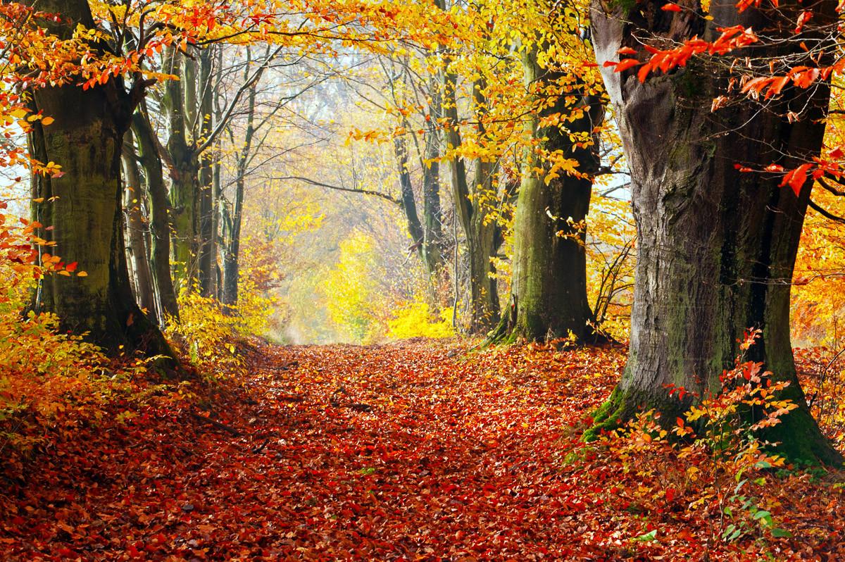Mystischer Herbstpfad