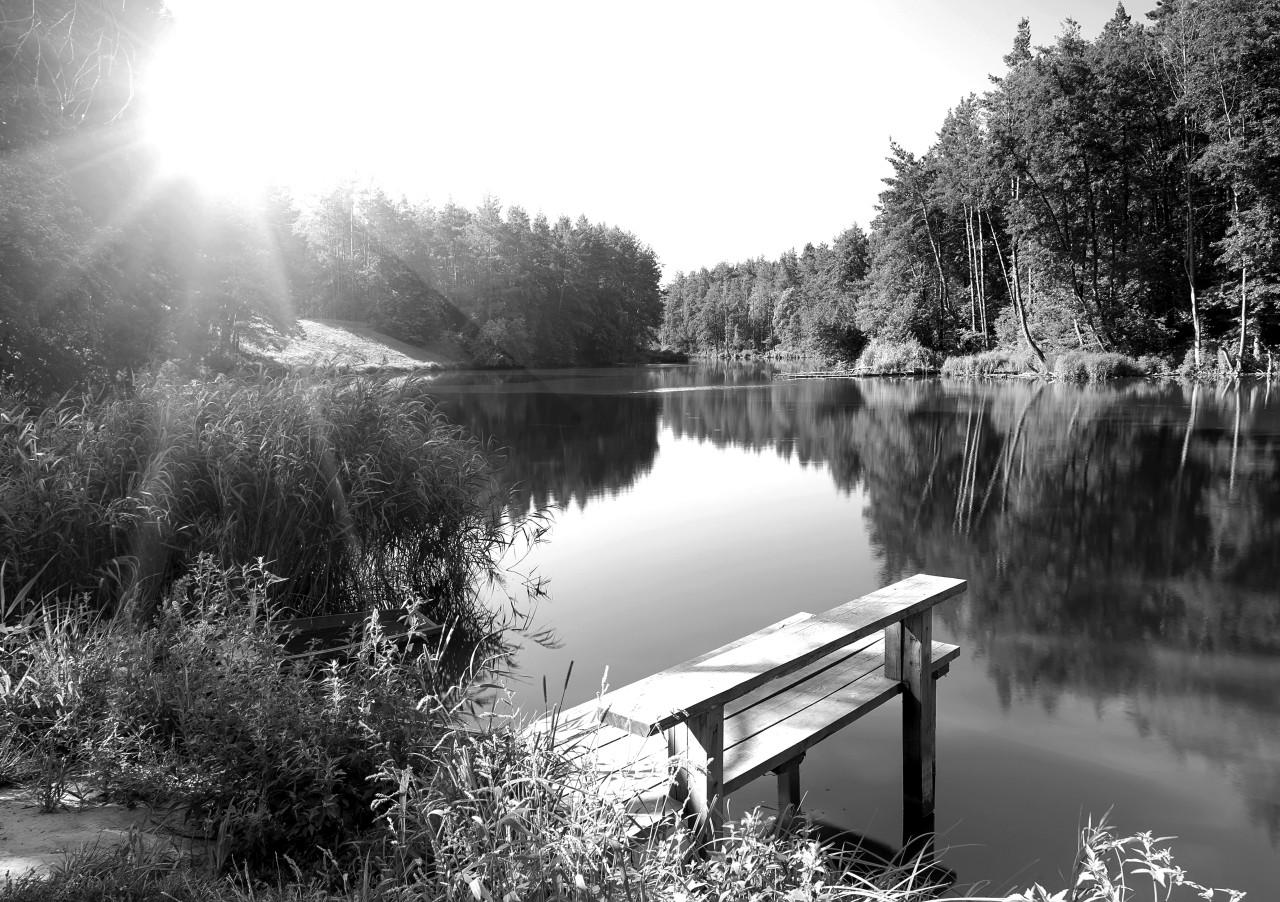Wald mir Fluss Schwarz & Weiß