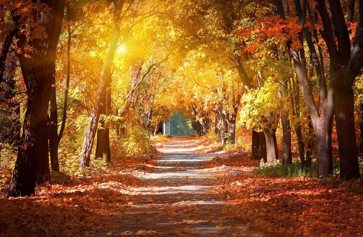 Gasse im Herbstpark