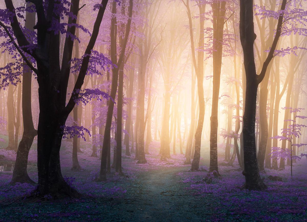 Mystischer Fogga-Wald