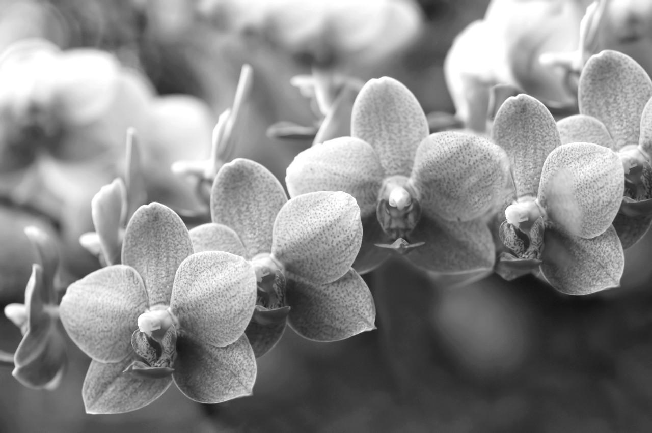 Blumen Schwarz & Weiß