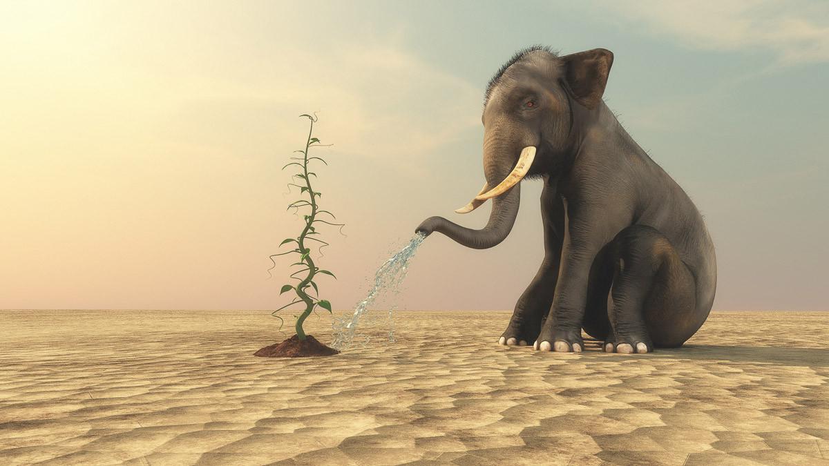 Elefanten, die Bohnen gießen