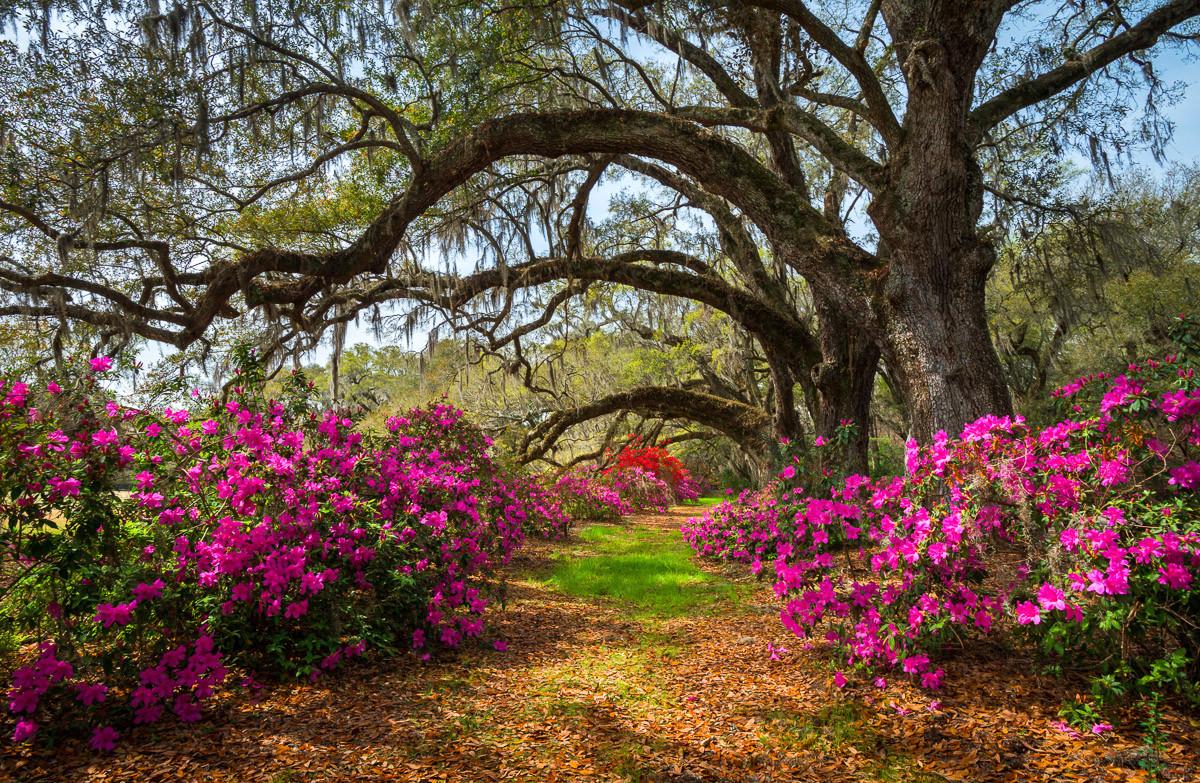 Frühlingsblumen und Oaktrees