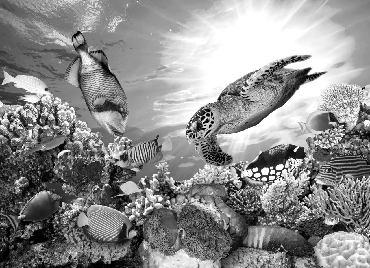 Korallenriff Schwarz & Weiß