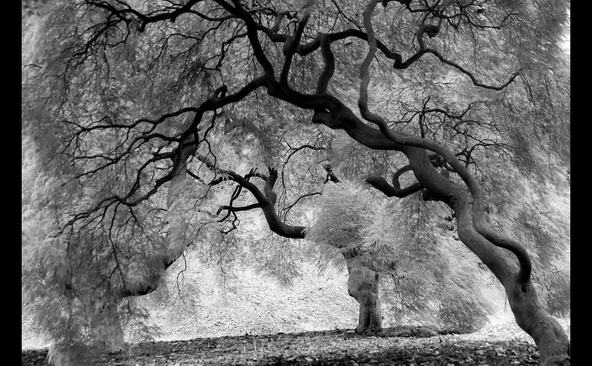 Mystic Trees Black & White